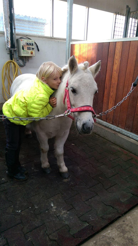 verdens dygtigste pony